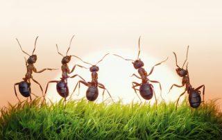 Summer Ant Pest Control