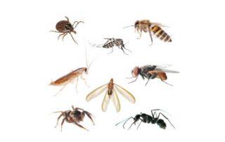 Common Biting Pests