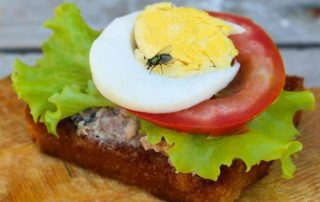Keeping Pests Away From Food