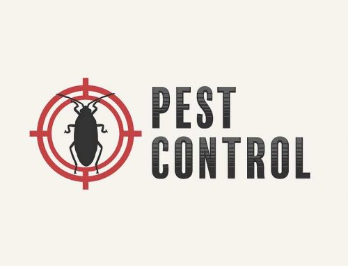 5 Things to Know About Pest Control