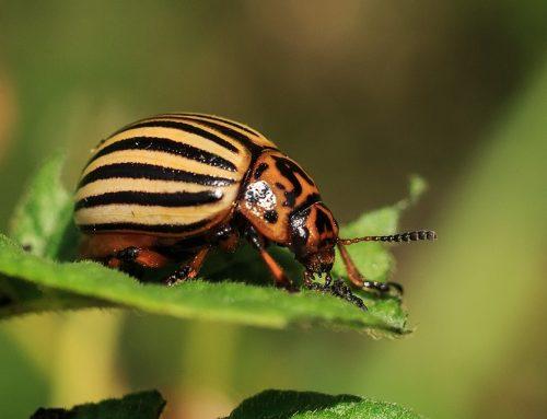 Spring Pests Alert!