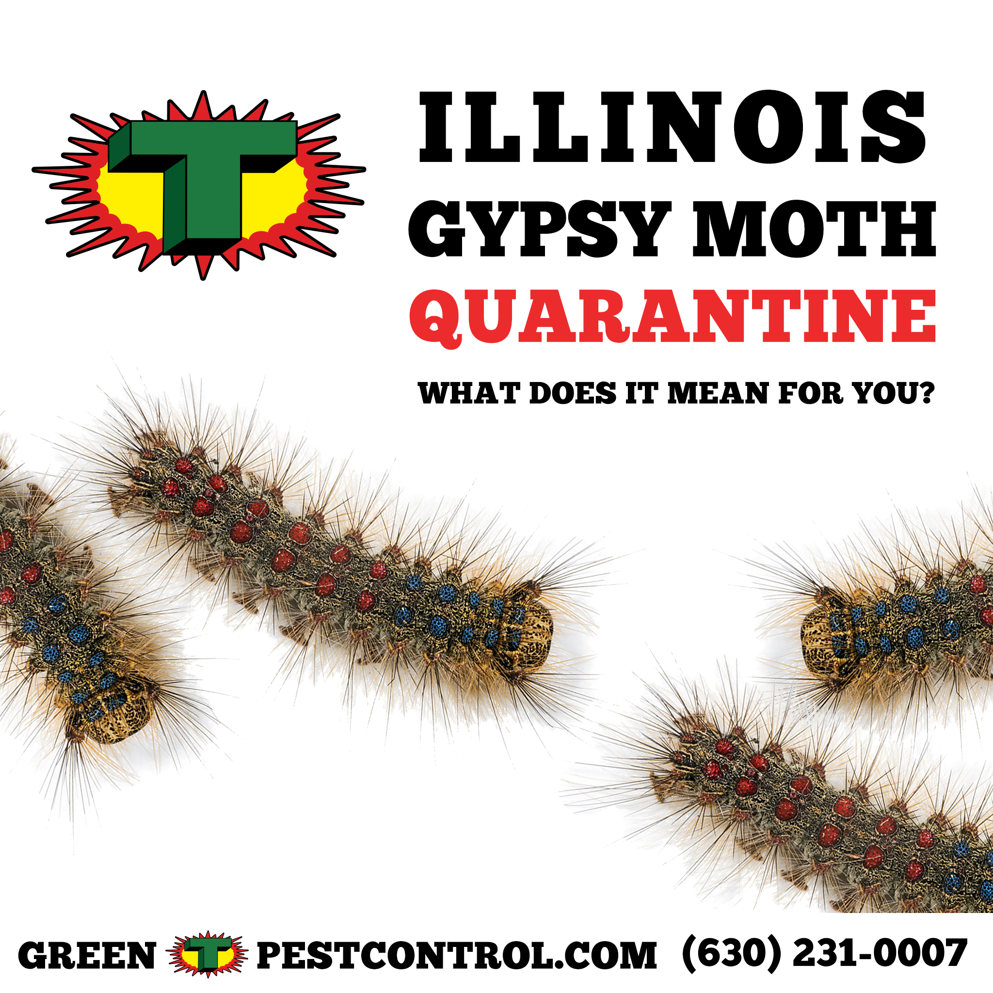 Illinois Gypsy Moth Quarantine Affected Counties What It Means Green T Pest Control