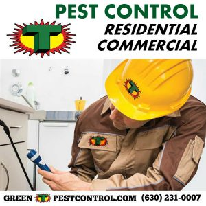 Residential and commercial pest control in Aurora, Naperville, and Chicagoland